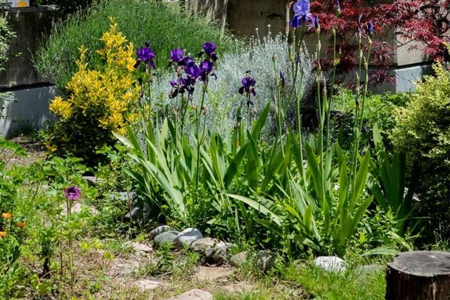 photo du jardin